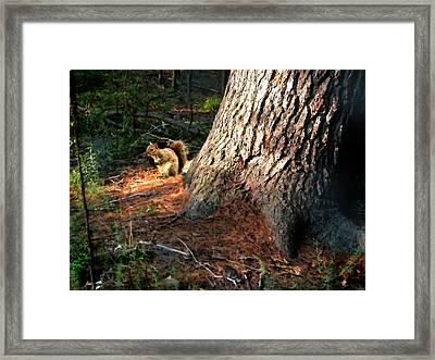 Furry Neighbor Framed Print by Paul Sachtleben