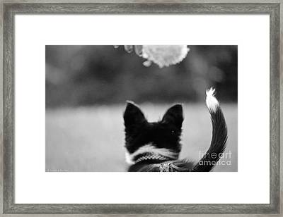 Fuzzy In Focus Framed Print by Susan Herber
