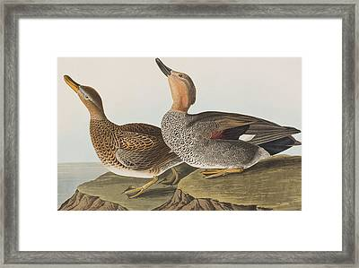 Gadwall Duck Framed Print by John James Audubon