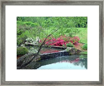 Garden Delight Framed Print by Kathy Bucari