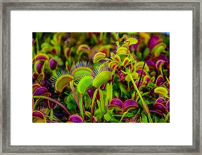Garden Of Fly Traps Framed Print by Garry Gay