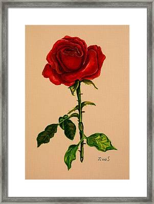 Garden Rose Framed Print by Zina Stromberg