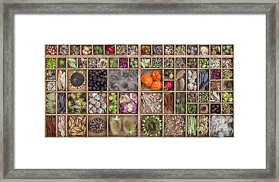 Garden Seed Pods Framed Print by Tim Gainey