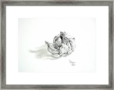 Garlic Bulb Framed Print by Rebecca Giles