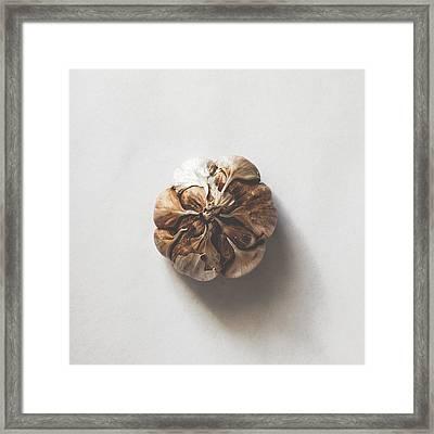 Kitchen Decor - Garlic Framed Print by Kate Morton