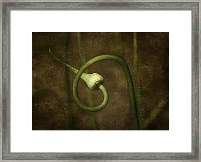 Garlic Framed Print by Svetlana Sewell