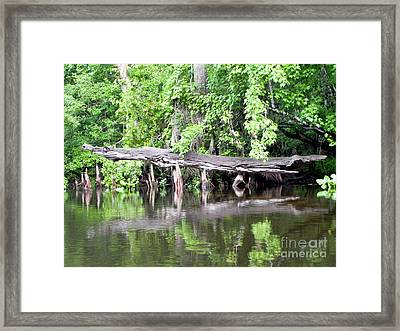 Gator Stump Framed Print by Jack Norton