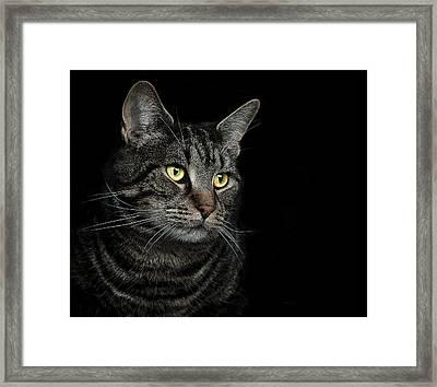 Gaze  Framed Print by Paul Neville