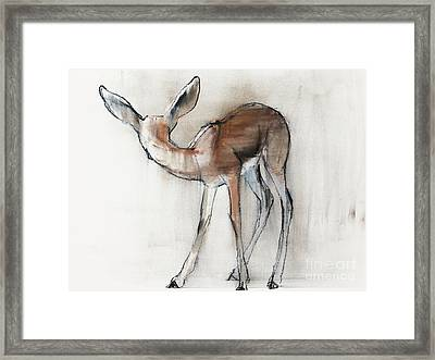 Gazelle Fawn  Arabian Gazelle Framed Print by Mark Adlington