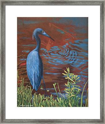 Gazing Intently Framed Print by Peter Muzyka