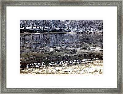 Geese Along The Delaware Framed Print by John Rizzuto