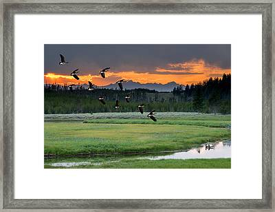 Geese Along The Madison River Framed Print by TL Mair