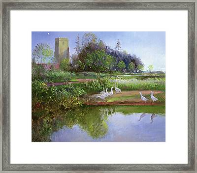 Geese At Sundown Framed Print by Timothy Easton