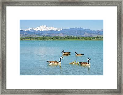 Geese Goslings And The Twin Peaks - Longs And Meeker Framed Print by James BO  Insogna