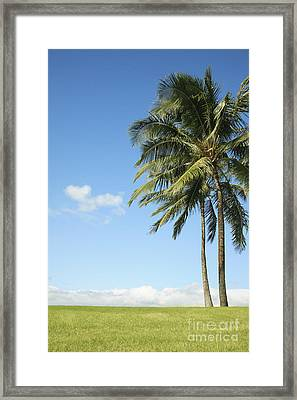 Generic Palm Tree Framed Print by Brandon Tabiolo - Printscapes