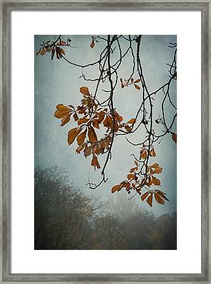 Gentle Fall  Framed Print by Maggie Terlecki