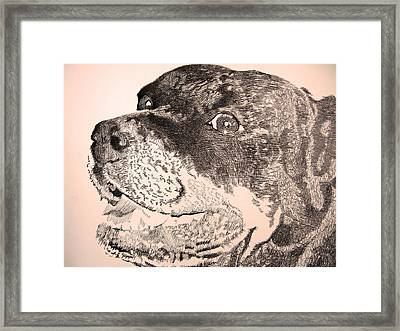 Gentle Giant Framed Print by Robbi  Musser