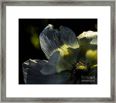 Gentle Jade Framed Print by Rich Governali