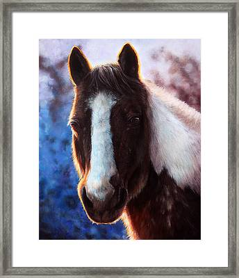 Gentle Snow Framed Print by Danielle Trudeau