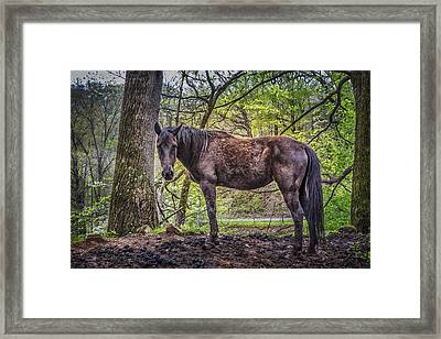 Gentleness Framed Print by Debra and Dave Vanderlaan