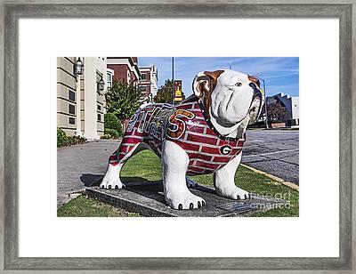 Georgia Bulldog Framed Print by John Greim