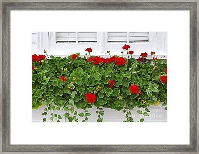 Geraniums On Window Framed Print by Elena Elisseeva