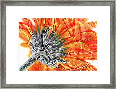 Gerbera Astract Framed Print by Clare Bevan
