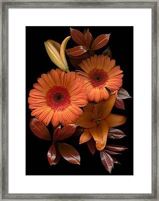 Gerbera Cluster Framed Print by Marsha Tudor