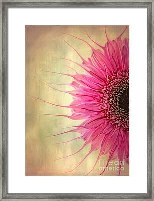 Gerbera Digital Framed Print by SK Pfphotography