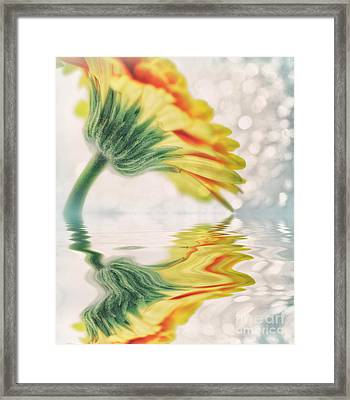 Gerbera In Water With Bokeh Framed Print by SK Pfphotography