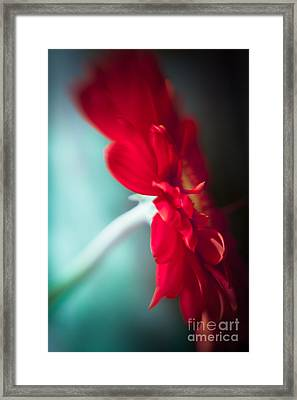 Gerbera Red I Framed Print by Lisa McStamp