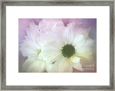 Gerbera Softness       Framed Print by Kaye Menner