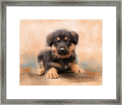 German Shepherd Puppy Portrait Framed Print by Jai Johnson