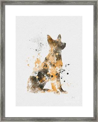 German Shepherd Framed Print by Rebecca Jenkins