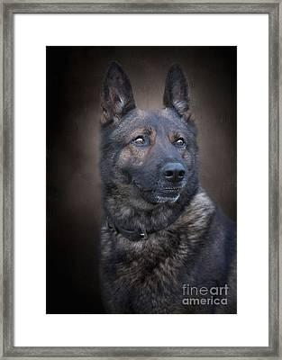 German Shepherd Framed Print by Sandy Potere