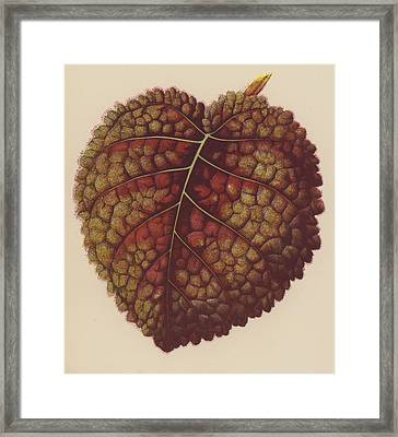 Gesnera Cinnabarina Framed Print by English School