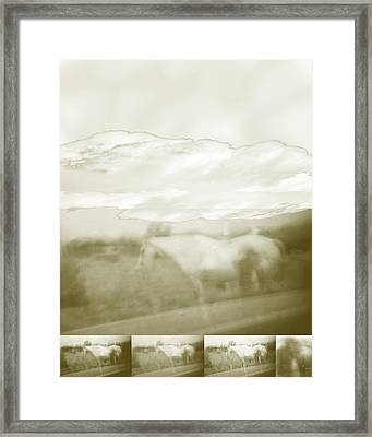 Ghost Horse Colorado Framed Print by Ann Tracy