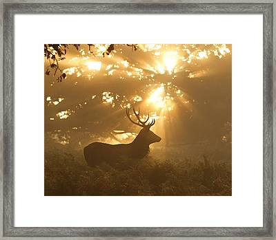Ghost Of The Forest Framed Print by Greg Morgan