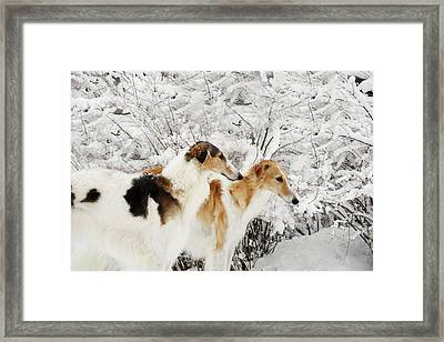 giant Borzoi hounds in winter Framed Print by Christian Lagereek