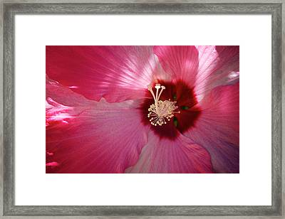 Giant Hibiscus Framed Print by Mary Lee Dereske