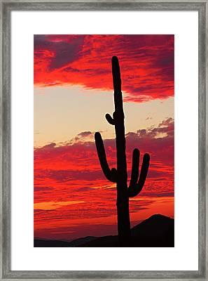 Giant Saguaro  Southwest Desert Sunset Framed Print by James BO  Insogna