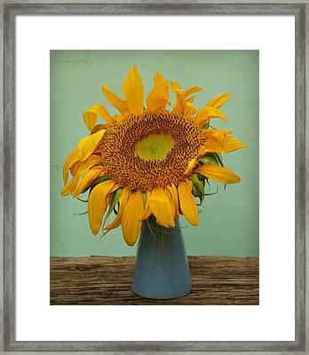 Giant Sunflower Still Life On Blue Framed Print by Chris Berry