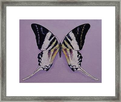 Giant Swordtail Butterfly Framed Print by Michael Creese