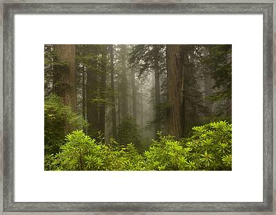 Giants In The Mist Framed Print by Mike  Dawson