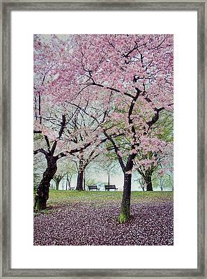 Gifts Framed Print by Mitch Cat
