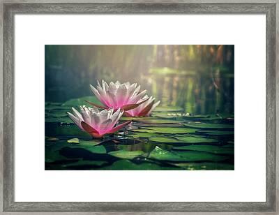 Gilding The Lily Framed Print by Carol Japp