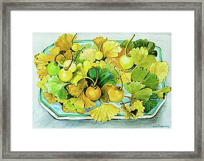 Ginkgo, Fruit And Leaves Framed Print by Joan Thewsey