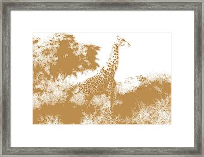 Giraffe 2 Framed Print by Joe Hamilton