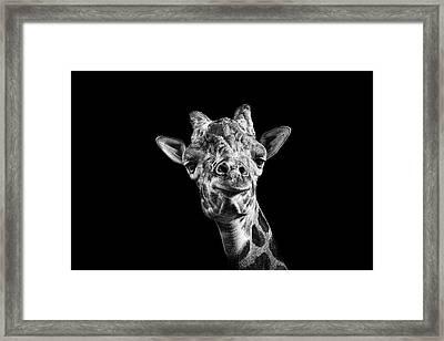 Giraffe In Black And White Framed Print by Malcolm MacGregor
