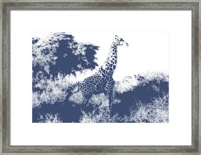 Giraffe Framed Print by Joe Hamilton